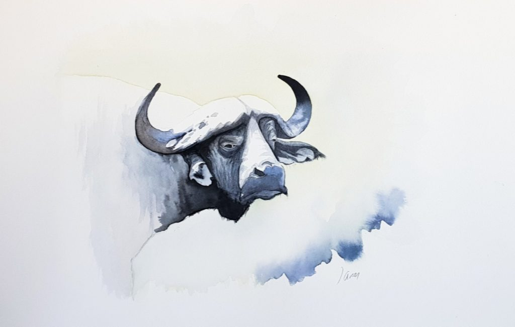 Bufalo cafre (Syncerus caffer).