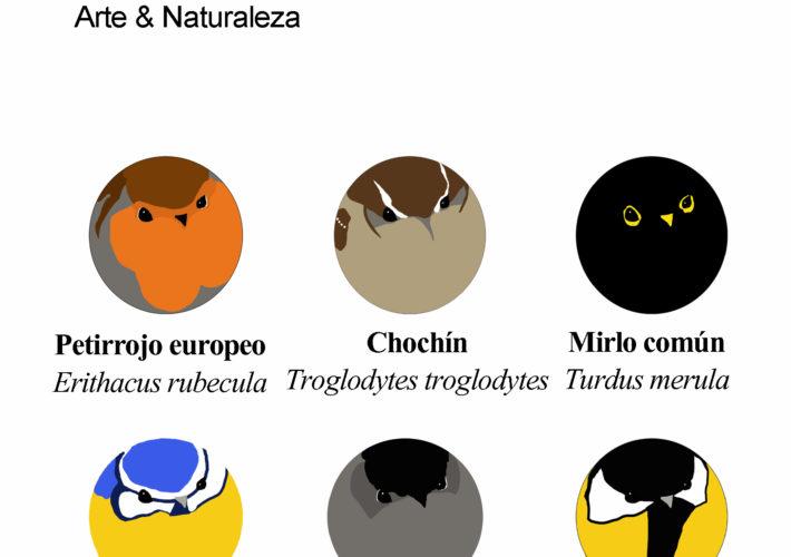 Lote de 6 chapitas Aves de Bosque 1