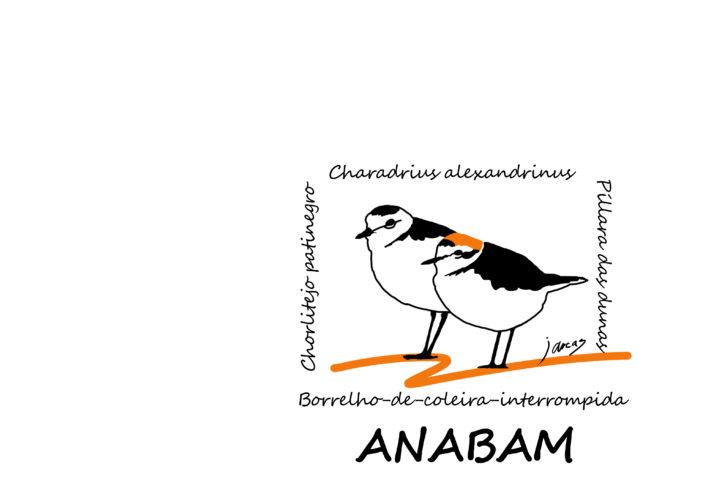 Diseño de Chorlitejos patinegros para Asociación Naturalista do Baixo Miño ANABAM