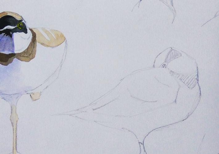 Chorlitejo Chico (Charadrius dubius)