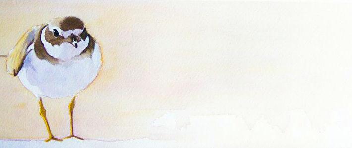 Cuaderno de Campo de las Islas Cies. Chorlitejo grande (Charadrius hiaticula)