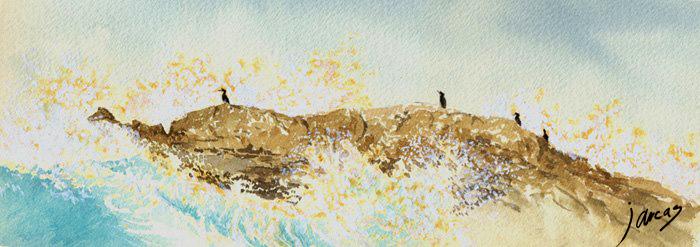 Cormoranes moñudos sobre roca.