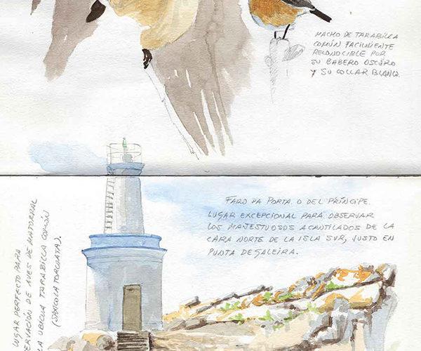 Cuaderno de Campo de las Islas Cíes. Faro da Porta y Tarabilla Común.