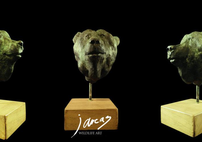 Busto de Oso Pardo Cantábrico (Ursus arctos arctos)