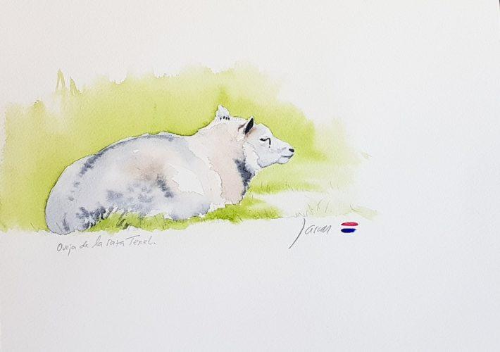 Oveja Texel II