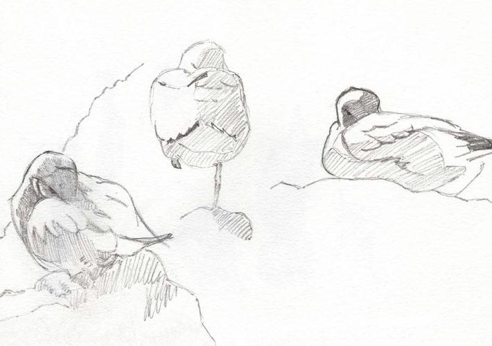 Cuaderno de Campo de las Islas Cíes. Patiamarillas, estudios en lápiz