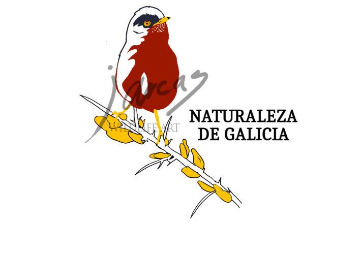 CAMISETA NATURALEZA DE GALICIA