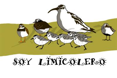 Diseño para camiseta Soy Limicolero