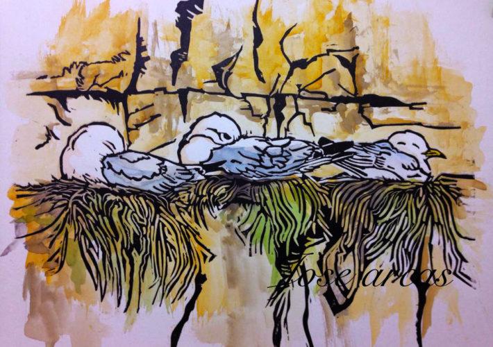 Trío de gaviotas tridáctilas